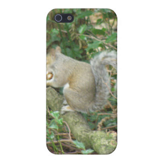 Squirrel with Acorn  Case For The iPhone 5