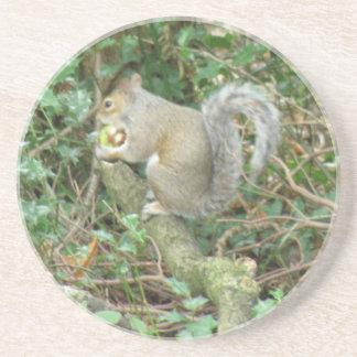 Squirrel with Acorn Coasters