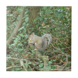 Squirrel with Acorn Tile