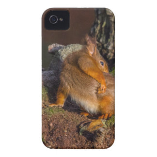 Squirrel With An Itch Case-Mate iPhone 4 Case