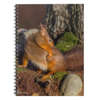 Squirrel With An Itch Spiral Notebook
