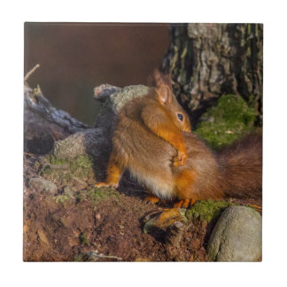 Squirrel With An Itch Tile