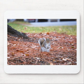Squirrel with food mouse pad