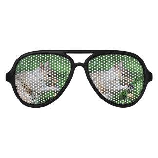 Squirrel with Nut Aviator Sunglasses