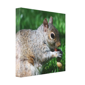 Squirrel with Nut Canvas Print