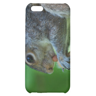 Squirrel with Nut iPhone 4 Case