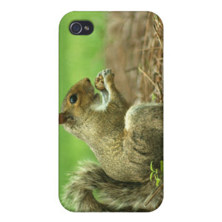 Squirrel with Nut iPhone 4 Cases