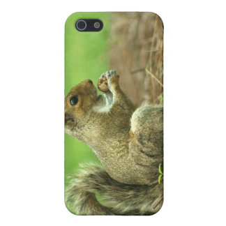 Squirrel with Nut Cover For iPhone 5
