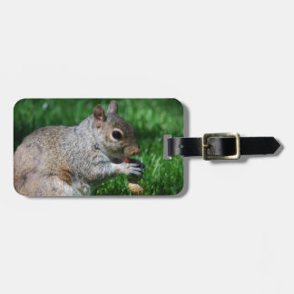 Squirrel with Nut Luggage Tag