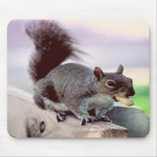 squirrel with peanut mouse pads