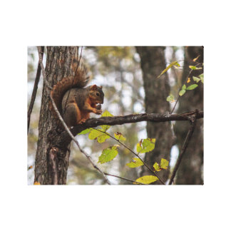 Squirrel with Walnut Gallery Wrapped Canvas