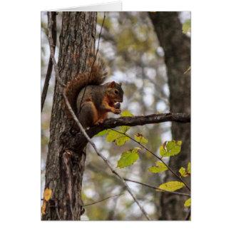 Squirrel with Walnut Greeting Card