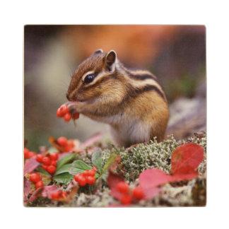 Squirrel Wood Coaster