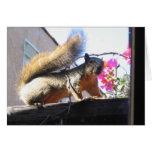 Squirrel World Housewarming Card