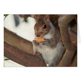 squirrelfriend card