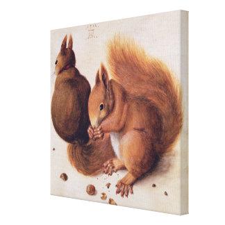 Squirrels, 1512 gallery wrap canvas
