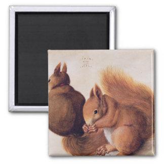 Squirrels, 1512 magnet