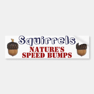 Squirrels Bumper Sticker