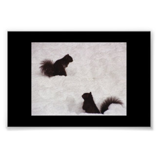 Squirrels in snow poster