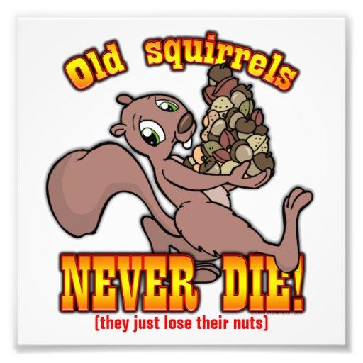 Squirrels Photo Art