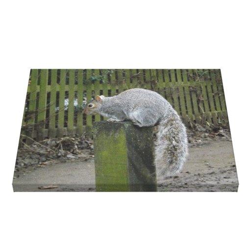 Squirrel's Post Gallery Wrap Canvas
