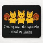 Squirrels steal my sanity
