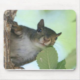 SQUIRRELY MOUSE MAT