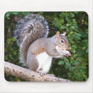 Squrrel Eating Bread Mouse Mats
