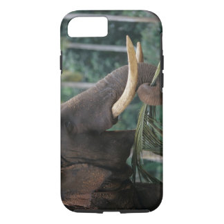 Sri Lanka, Elephant feeds at Pinnewala Elephant 2 iPhone 8/7 Case