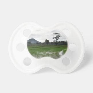 Sri Lanka rice fields Dummy