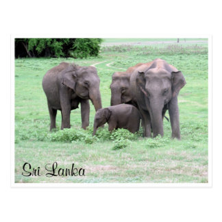 sri lankan elephants postcard