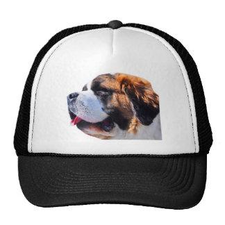 St bernard cap