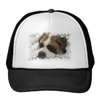 St Bernard Dog Baseball Hat