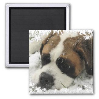St Bernard Dog Magnet