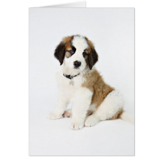 St. Bernard Puppy Card