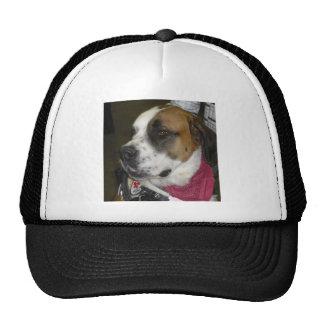St. Bernard Service Dog Hat