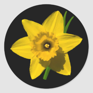 'St.David's day' Daffodil stickers - sheet of 20