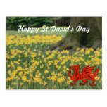 St. David's Day Daffodils Postcard