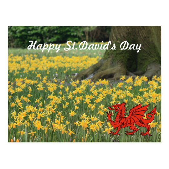 St. David's Day Daffodils Postcard