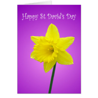 St Davids Day Welsh Daffodil Greeting Cards