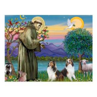 St Francis (W) - Two Shelties (D&L) Postcard