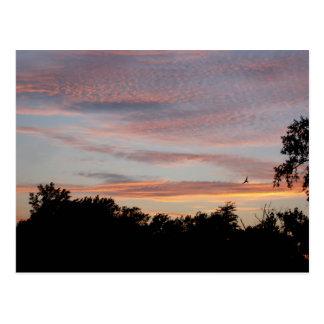 St. Louis Sunset Postcard
