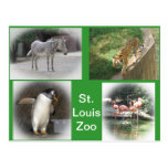 St. Louis Zoo Postcard