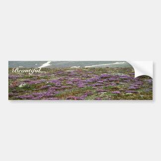 St. Matthew Island, Blackish (or Purple) Oxytrope Bumper Stickers