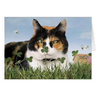 St. Patrick's Day Cat Card Funny Cute Best