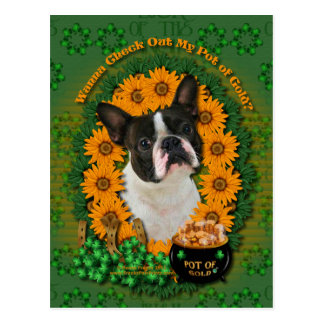 St Patricks - Pot of Gold - Boston Terrier Postcard