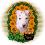St Patricks - Pot of Gold - Pitbull - Petey