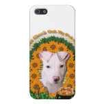 St Patricks - Pot of Gold - Pitbull - Petey iPhone 5 Cases