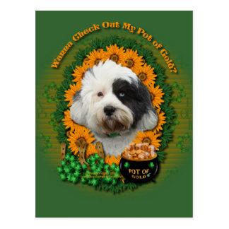 St Patricks - Pot of Gold - Tibetan Terrier Postcard