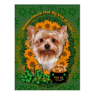 St Patricks - Pot of Gold - Yorkshire Terrier Postcard